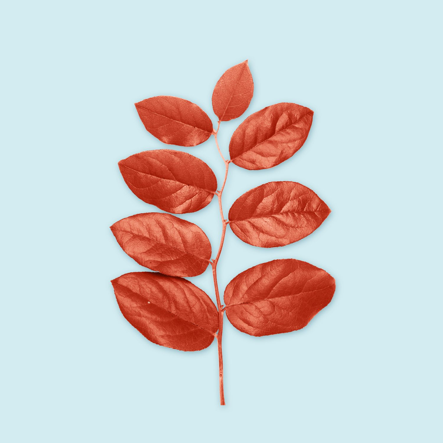 https://skillown.com/portfolio/well-designed-leaf/